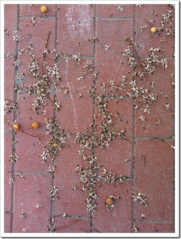 Foto-26-05-12-11-53-29_thumb.jpg
